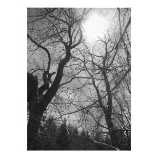 Foto Negro y blanco abstractos del sol del árbol