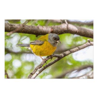 Foto Pájaro amarillo