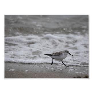 Foto Pájaro de orilla 001