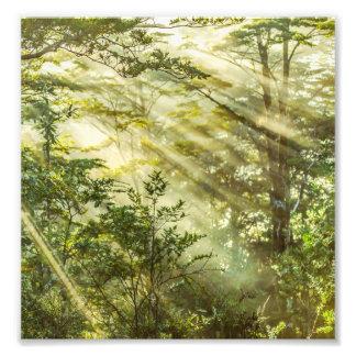 Foto Parque de Queulat, paisaje del bosque de la