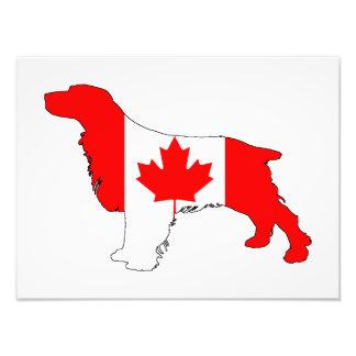 Foto Perro de aguas Canadá
