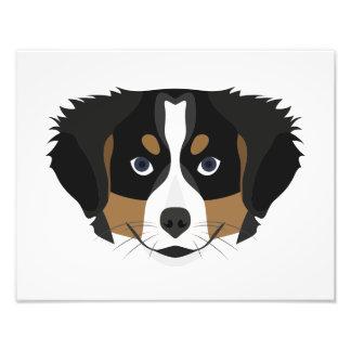 Foto Perro de montaña de Bernese del ilustracion