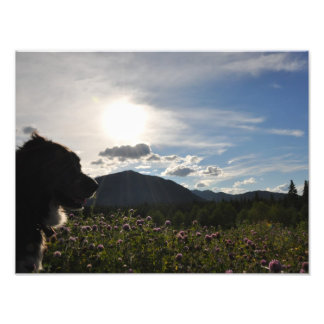 Foto Perro en flores de la montaña