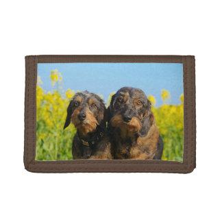 Foto principal del retrato de Dackel de dos perros