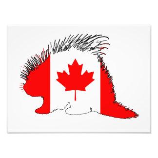 Foto Puerco espín Canadá