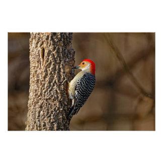 Foto pulsación de corriente Rojo-hinchada en un árbol