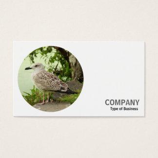 Foto redonda - gaviota de arenques joven tarjeta de negocios