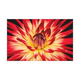 Foto roja de las ilustraciones de la flor del lienzo