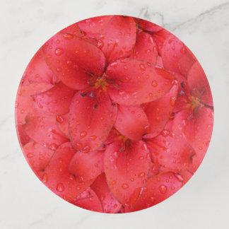 Foto roja del lirio del jardín