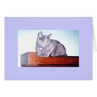 Foto rusa del gato azul en tarjeta en blanco