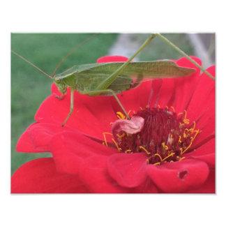 Foto Saltamontes en la flor