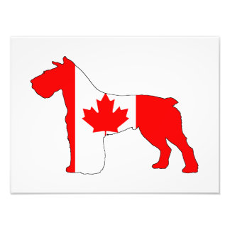 Foto Schnauzer Canadá