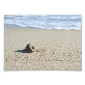 Foto Seashell