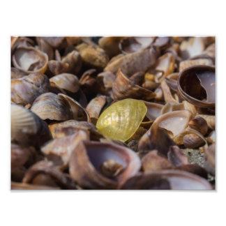 Foto Seashell de oro