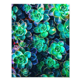 Foto suculenta verde de la naturaleza