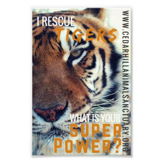 Foto Superpoder del tigre