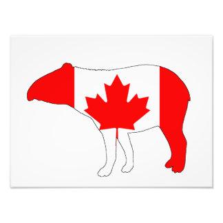 Foto Tapir Canadá