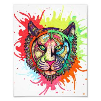Foto Tigre del arco iris