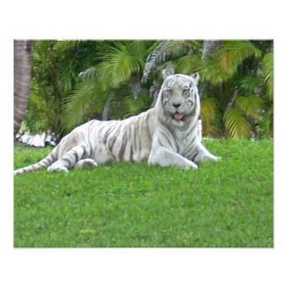 Foto Tigre y palmeras blancos sonrientes