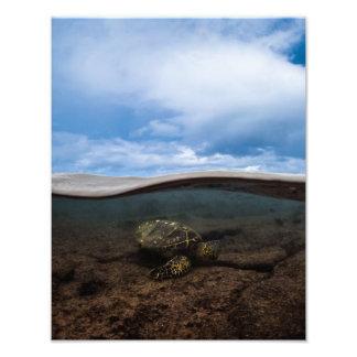 Foto Tortuga de Honu bajo arte de la pared de la