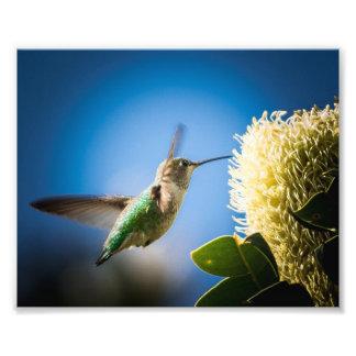 Foto UCSC - Estampado de flores del colibrí