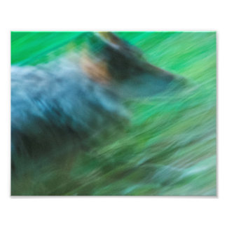 """Foto Velocidad 10"""" del lobo x 8"""", favorable papel de la"""