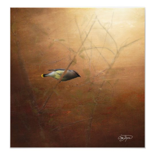 Foto Winter Waxwing Photographic Art - Frame It!
