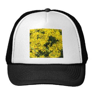 Fotografía amarilla de la margarita de Enlgish Gorro De Camionero