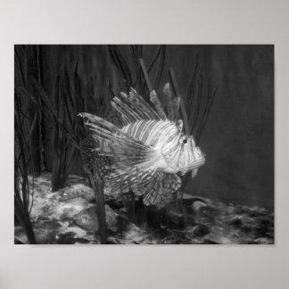 Fotografía blanco y negro de los pescados póster