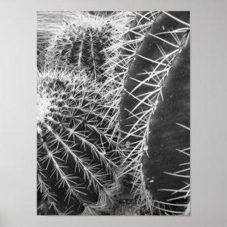 Fotografía blanco y negro del cactus póster