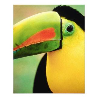 Fotografía colorida de la naturaleza salvaje del p tarjetas publicitarias