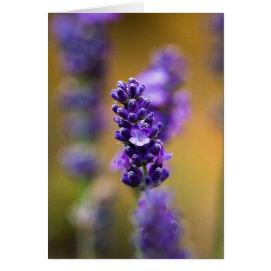 Fotografía de la macro de la flor de la lavanda tarjeta de felicitación