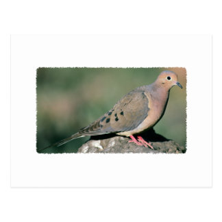 Fotografía de luto de la paloma postal
