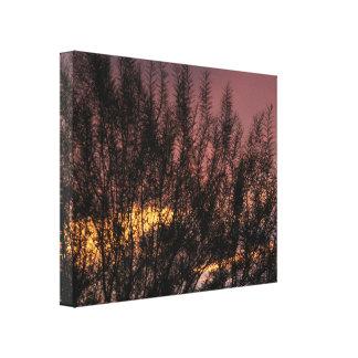 FOTOGRAFÍA del ÁRBOL de la PUESTA DEL SOL de la Impresión En Lienzo