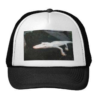 Fotografía del color del cocodrilo del albino de l gorros bordados