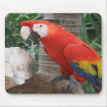 Fotografía del Macaw del escarlata Alfombrilla De Ratones