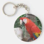 Fotografía del Macaw del escarlata Llaveros