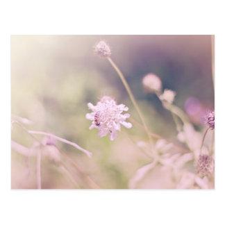 Fotografía del pastel de la flor y de la abeja tarjetas postales