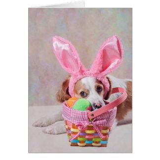 Fotografía del perro con los oídos rosados de la tarjeta de felicitación