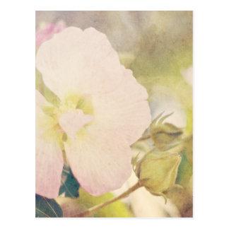 Fotografía en colores pastel de la flor postal