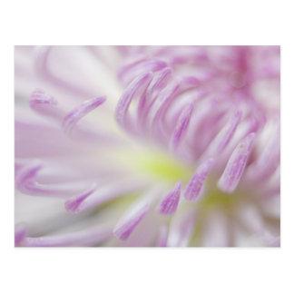 Fotografía en colores pastel rosada de la flor postales