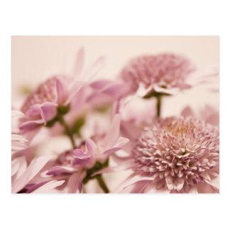 Fotografía en colores pastel rosada de los Wildflo Postal