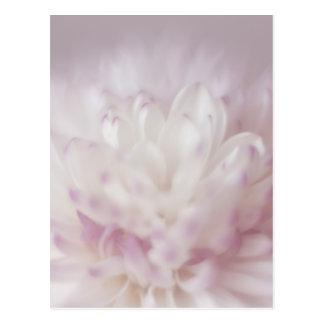Fotografía en colores pastel suave de la flor postal