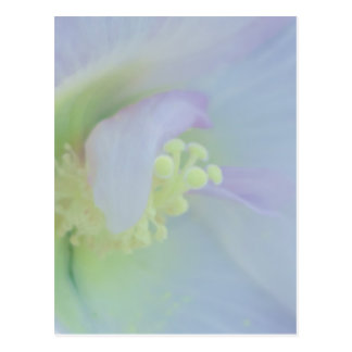 Fotografía en colores pastel suave de la flor tarjetas postales