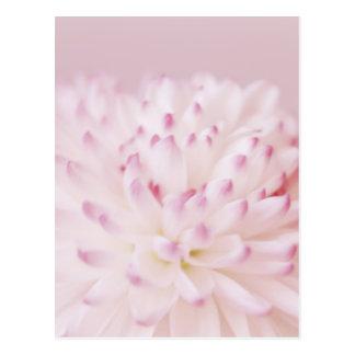 Fotografía en colores pastel suave de la flor postales
