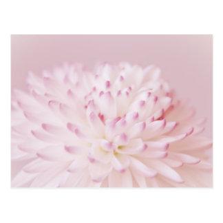 Fotografía en colores pastel suave de la flor tarjeta postal