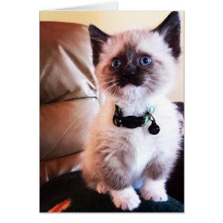 Fotografía enmascarada observada azul adorable del tarjeta de felicitación