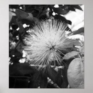Fotografía floral blanco y negro póster