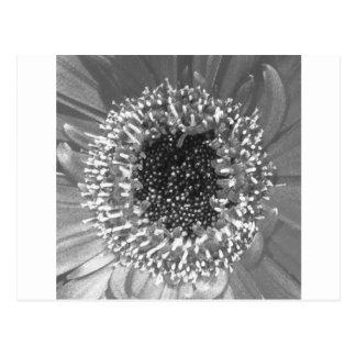 Fotografía floral blanco y negro postal