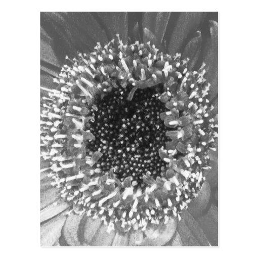 Fotografía floral blanco y negro tarjeta postal
